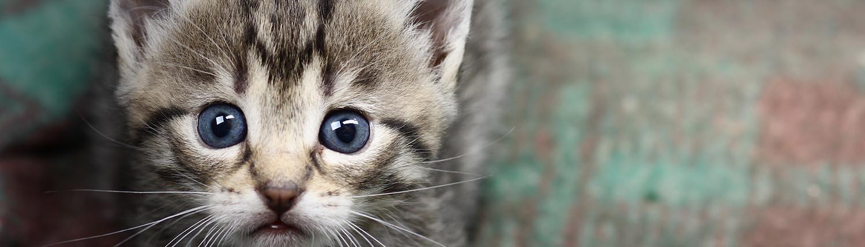 Baby Kittens Charleston Animal Society